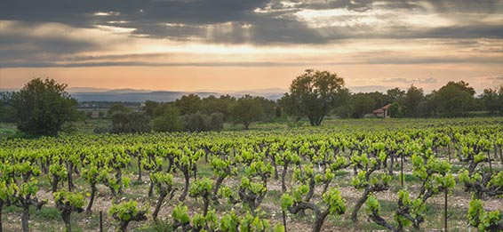 wein provence