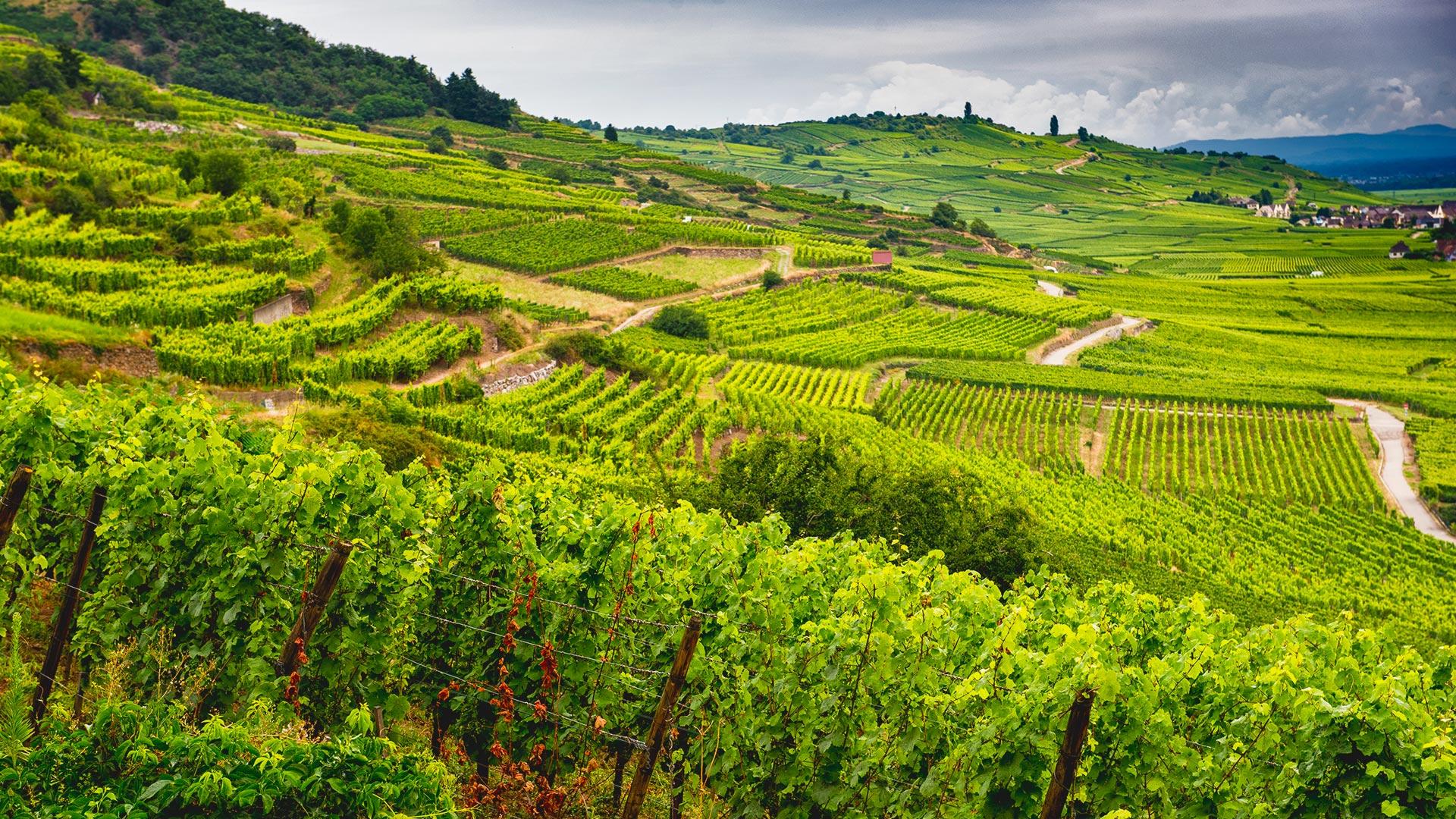 Weinregion Champagne