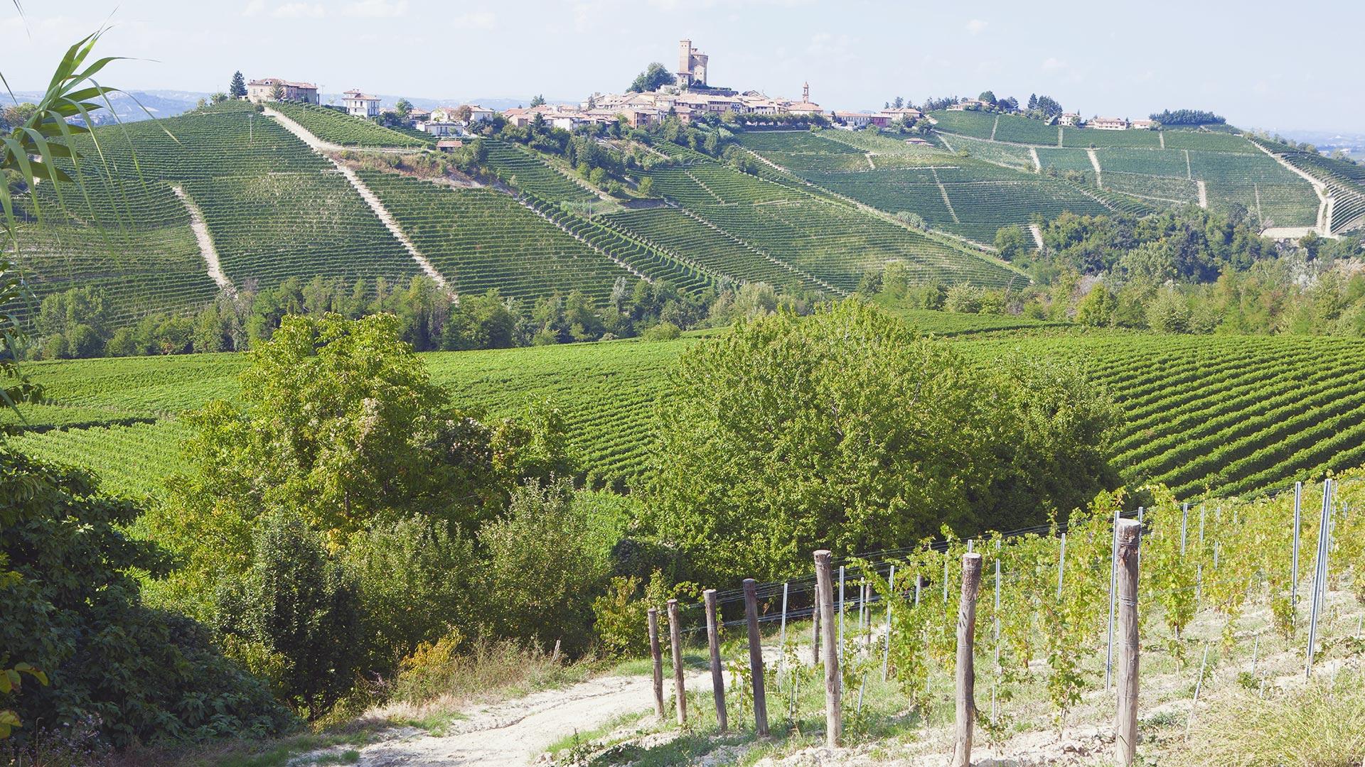 Weinbauregion Piemont
