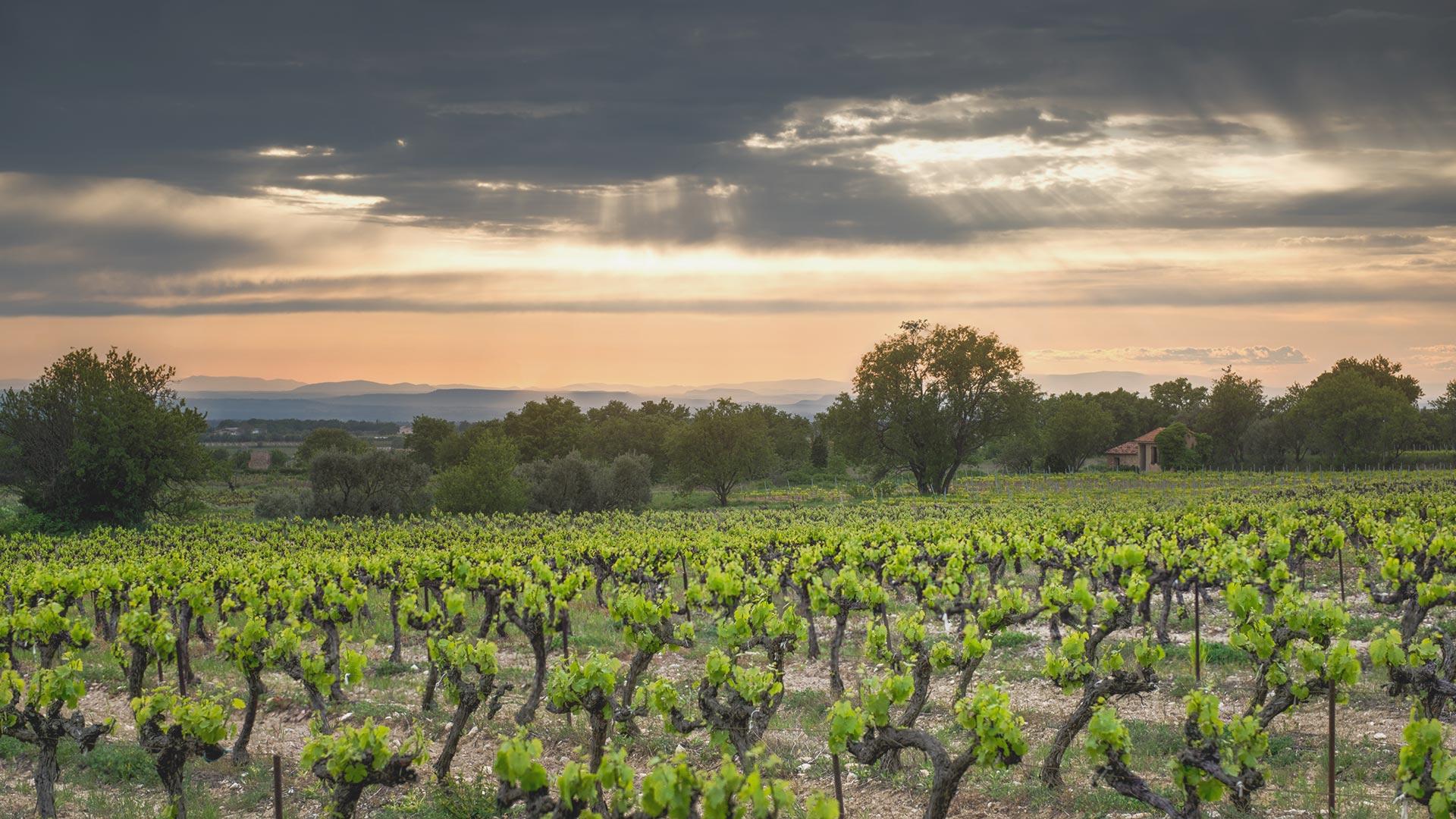 Weine aus der Provence