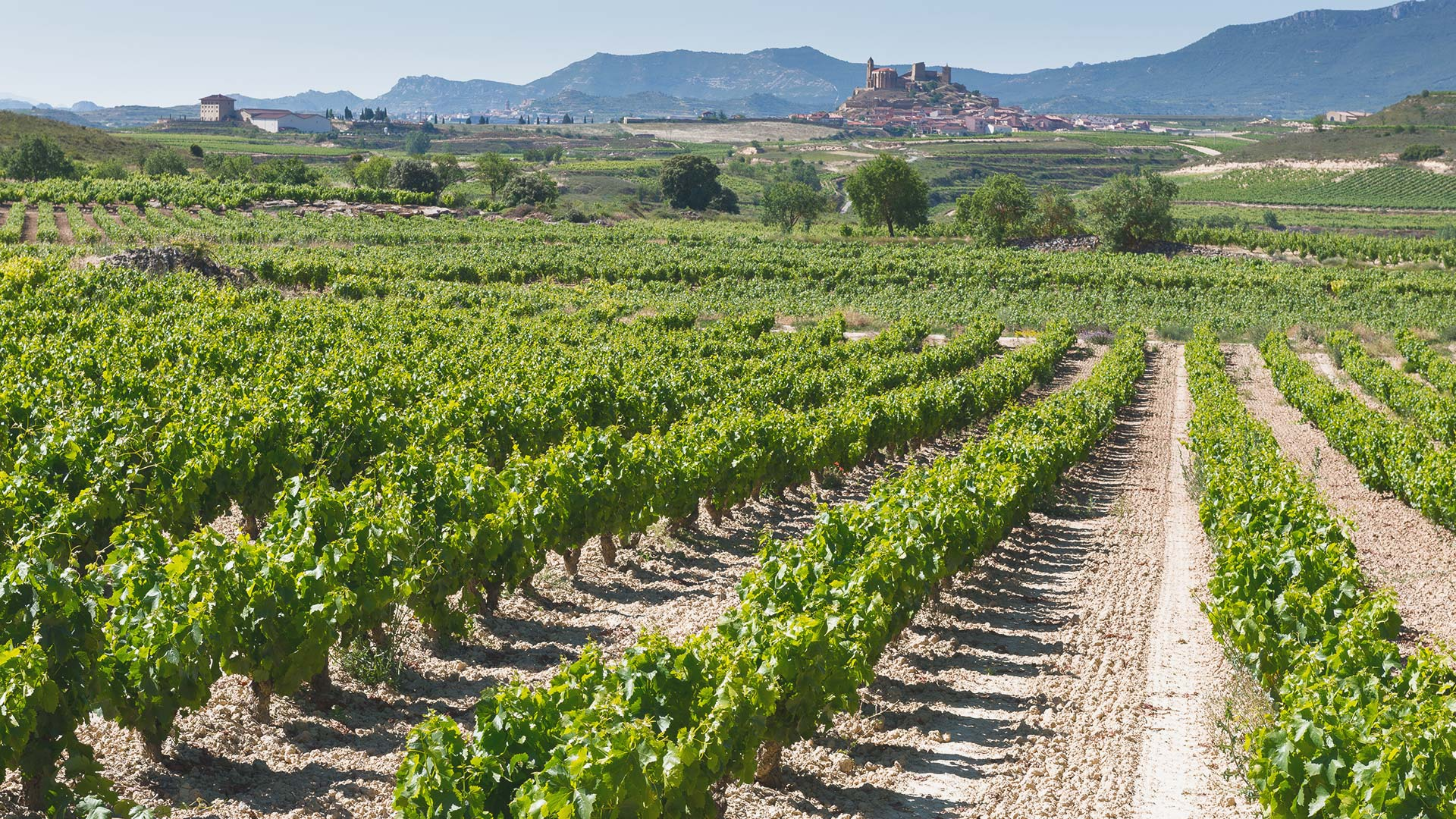 Weine aus Rioja