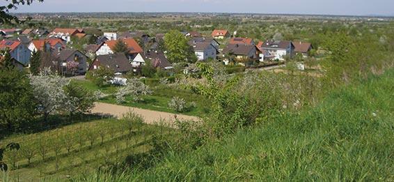Winzergenossenschaft Königschaffhausen-Kiechlinsbergen