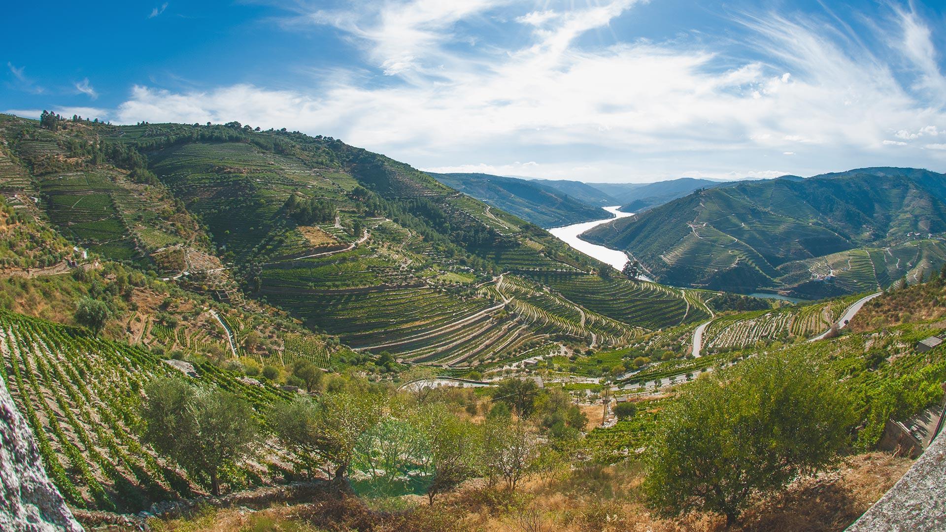 Weine aus dem Douro-Tal