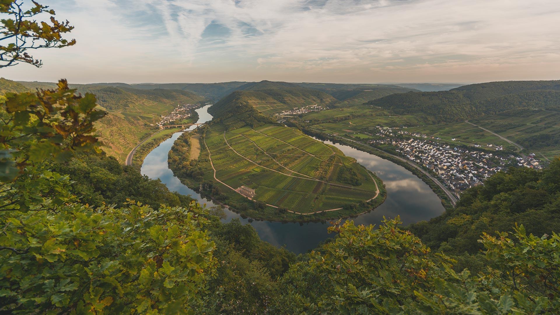 Weine aus der Pfalz