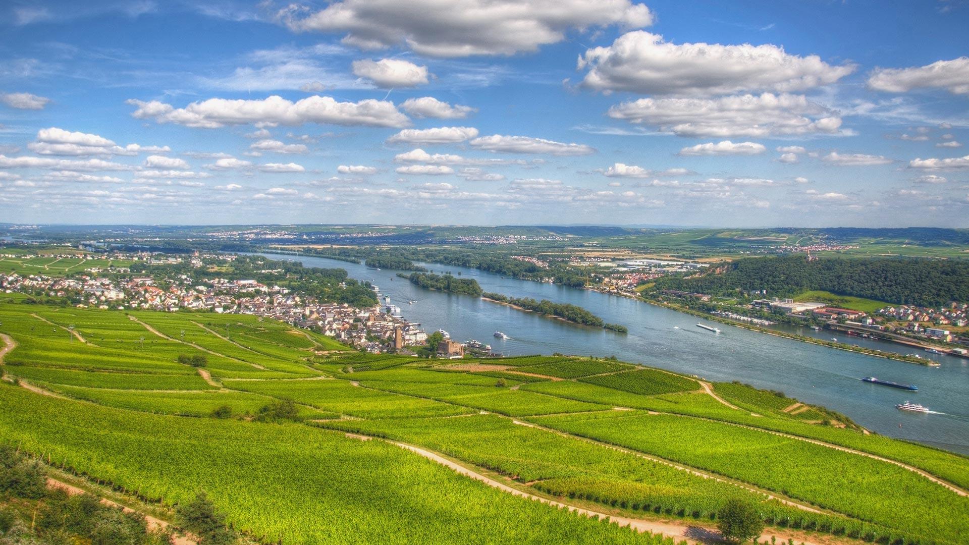 Weine aus dem Rheingau