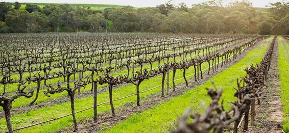 Heartland Wines