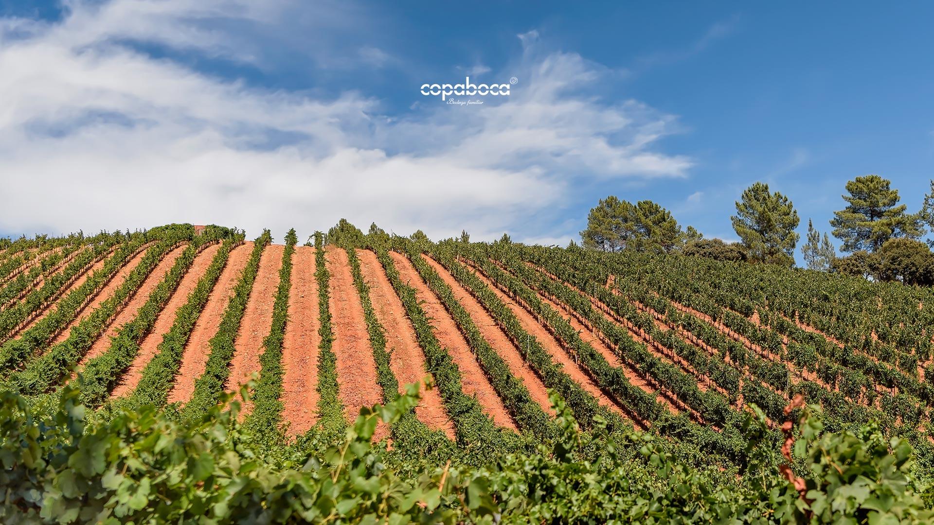 Bodegas Copaboca