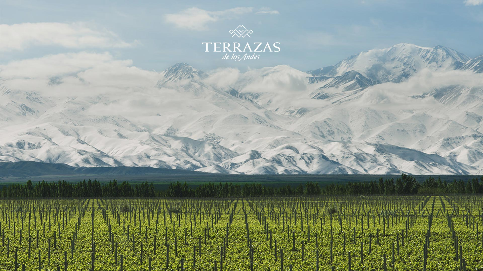 Terrazas De Los Andes Argentina Wineries